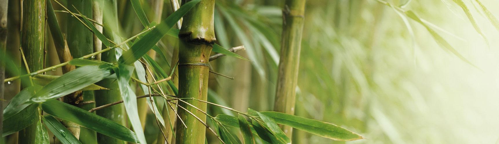 Bambus_1723x500
